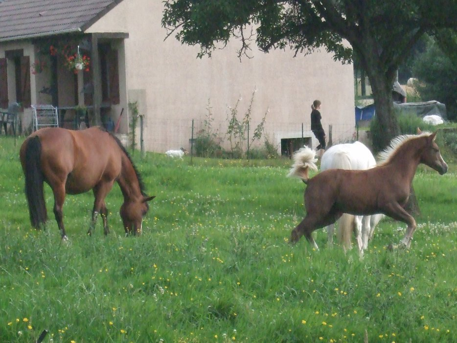 2012 fille de Pawnee et Prana des Islots!!! news photos!! 3109092547_2_9_KDafICWE