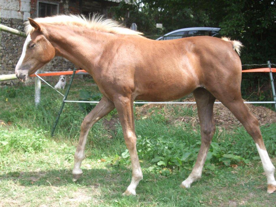 2012 fille de Pawnee et Prana des Islots!!! news photos!! 3111369527_2_3_axb8MCRs